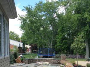backyard trampoline .jpg